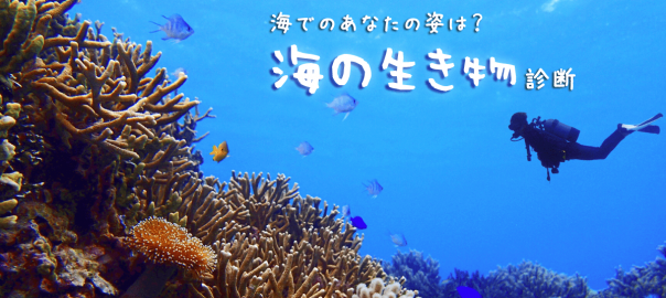 【どんな姿で泳ぐ?】あなたが海の生き物だったら診断