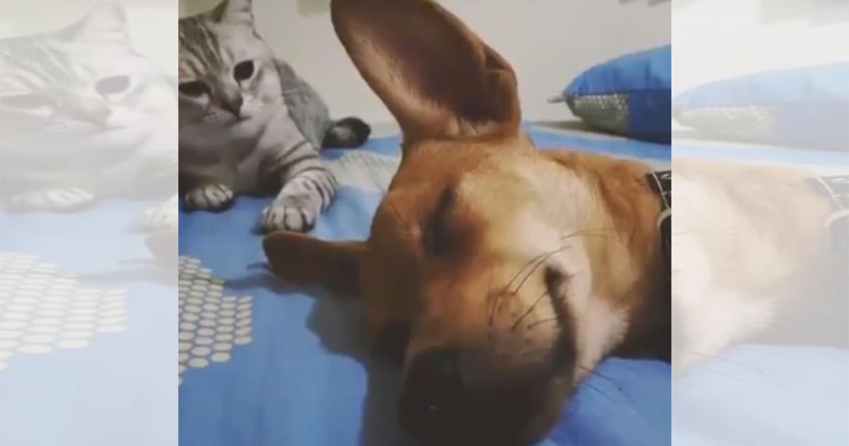 猫 犬 パンチ2