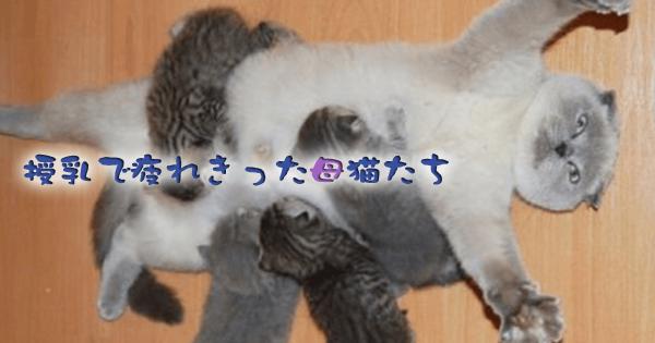 猫界でもママは大変!授乳に次ぐ授乳で疲れ切った母猫たち12選