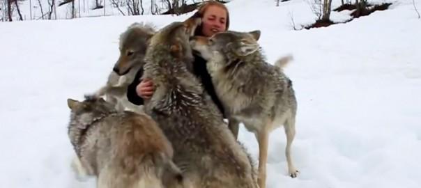 オオカミ 再会1