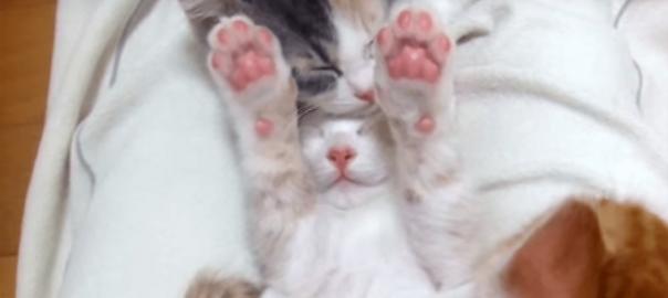 仲良し子猫ズ!重なって眠る子猫を一匹どかしてみたら新事実発覚?!
