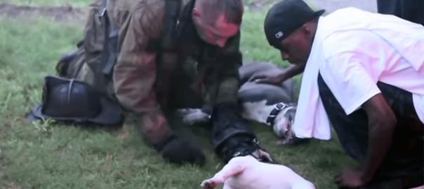 勇気ある行動!火災現場で意識不明の犬を助けた消防士のとっさの判断