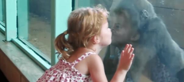 可愛いハプニング!動物園の動物と子どもが触れ合うとこうなる