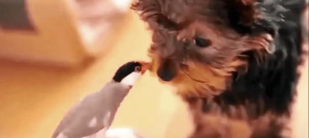 体の大きさが違っても!ワンコと小鳥の熱々カップルがキス♡