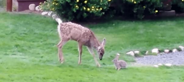 バンビととんすけは実在した!子鹿とウサギが遊ぶ光景がディズニー映画みたい