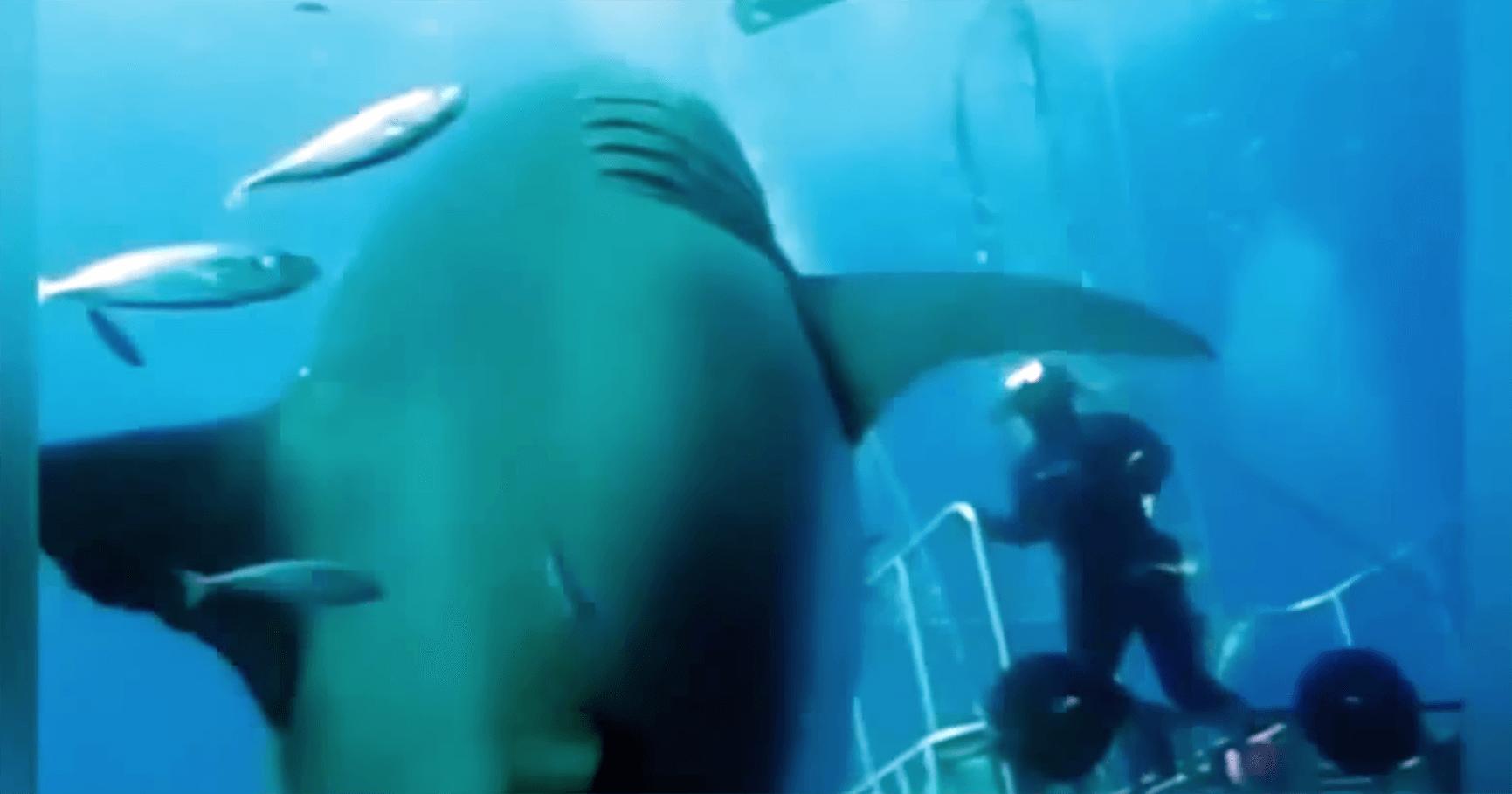 出会ったら終わり!撮影史上最大級のサメがデカすぎてガクブル