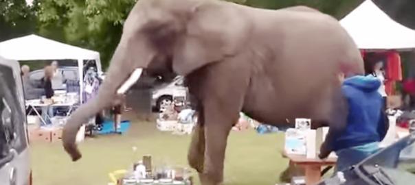 会場騒然!巨大ゾウが突然フリーマーケットにやってきた