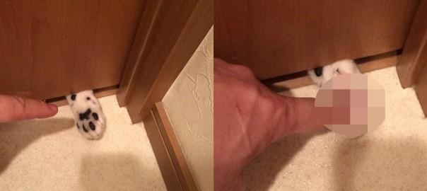 この罠に引っかからない猫好きはいない!ドアから覗く肉球を触った結果・・・