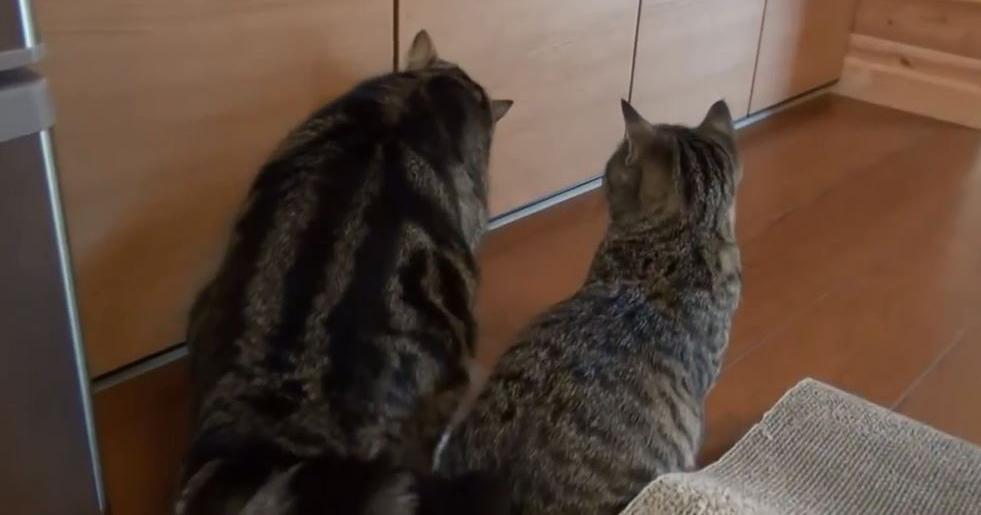 戸棚と猫2