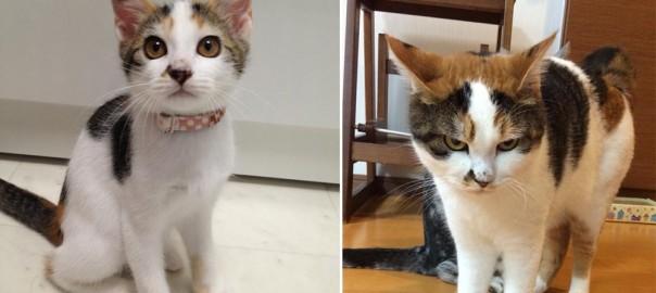 2年で何があった?! 天使ような美少女猫のまさかの変貌に驚きを隠せない(画像12枚)