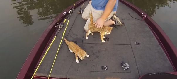 まさかの珍客現る!釣りをしていたら2匹の子猫が泳いでボートに近付いてきた