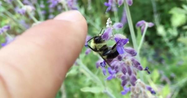 「ヘーイ!」指を近づけるとハイタッチするノリのいい蜂が存在する?!