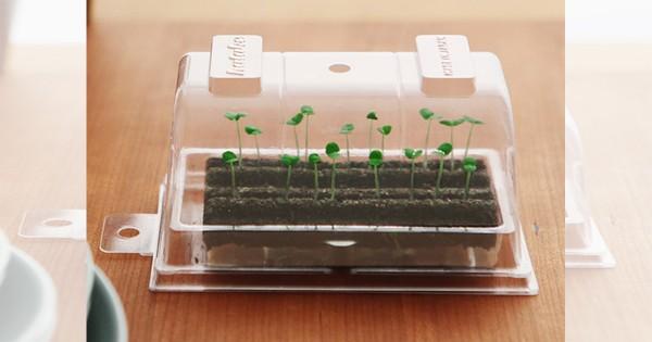 手のひらサイズの畑?! 自宅で気軽に家庭菜園を始められる栽培キット