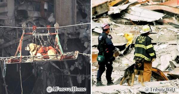希望をくれた!9.11米同時多発テロで活動した災害救助犬たちが海外で話題に