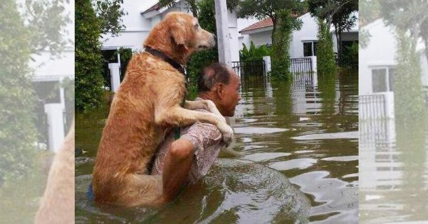 私たちと犬が最高のパートナーであるとわかる13枚の写真