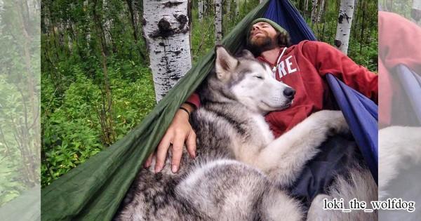 カワイイ子とは旅をせよ!ウルフドッグとご主人の素敵な冒険日記に心をくすぐられる(画像11枚)