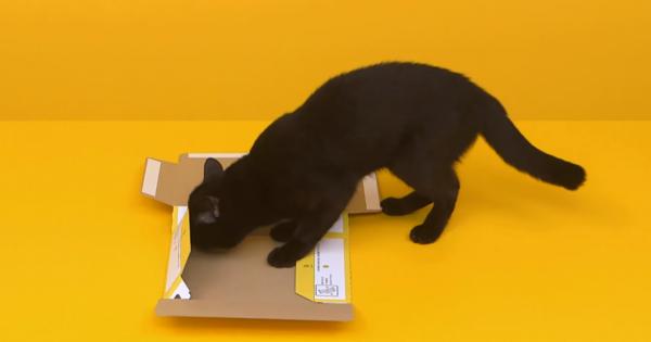 ニヤニヤ注意!クロネコヤマトの宅急便BOXを本物の黒猫が組み立ててみた