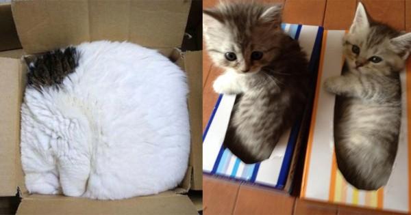 猫は収納の達人である16選