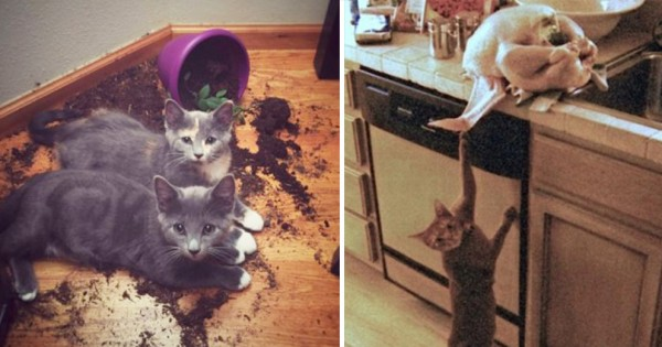 猫の飼い主が結婚相手に最適である15の理由