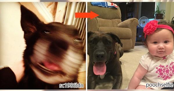 この発想は天才的!愛犬と最高のツーショットを撮る超シンプルな方法