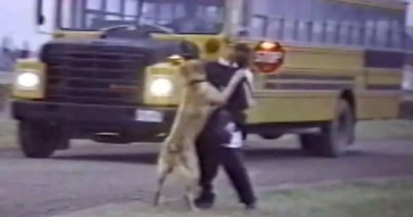 「行かないで!」子どもが学校に行くのを阻止するワンコたちが健気で微笑ましい