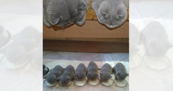 猫界でも育児は大変です!やんちゃな子猫たちとしっかり両親猫たちに癒される10選