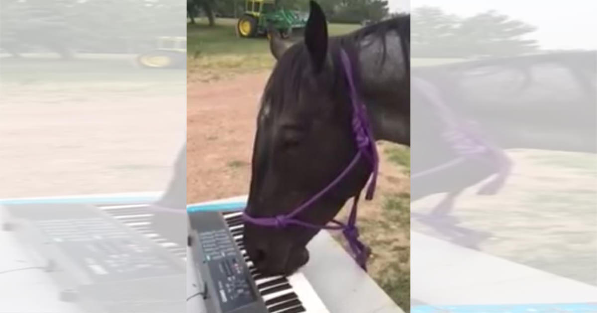馬 ピアノ2