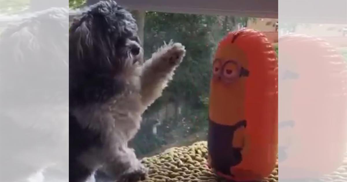 犬 バルーン2