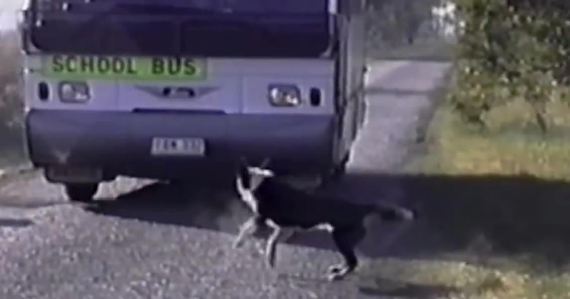 犬 登校阻止2