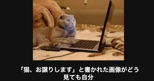 5秒で吹き出す!シルバーウィークを笑いで締めくくる猫の傑作大喜利20選
