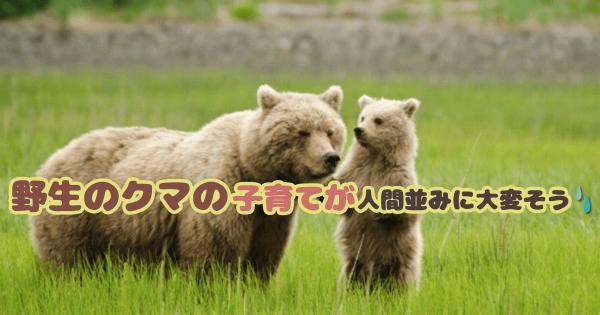 【母グマさん、ご苦労様です】野生のクマの子育てが人間並みに大変そう(画像10枚)
