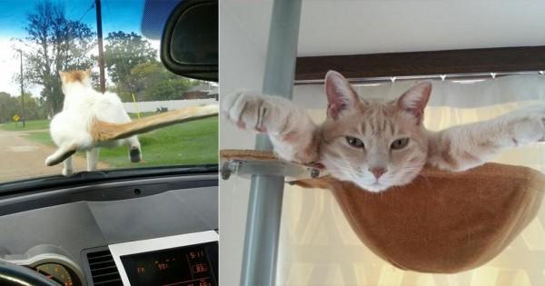猫がご主人を笑わせにきた瞬間20選