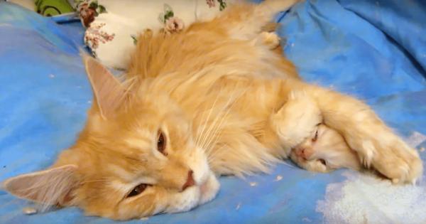 「ゆっくり眠りなさい」花火が鳴り響く中で母猫がとった行動に心染みる