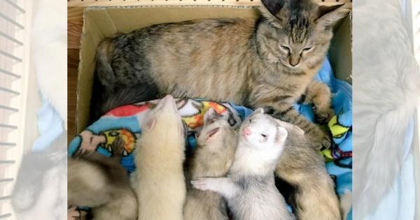 いつも賑やか大家族!母親みたいな末っ子猫とイタチ兄弟の日常に癒される(画像13枚)