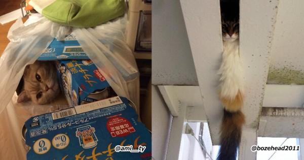 【小学生だったらヒーロー】猫がかくれんぼの達人だとわかる10の証拠