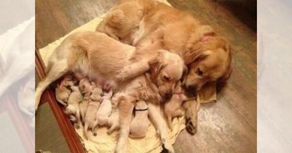 【一度に7匹は当たり前】授乳する母犬たちがマジで大変そう(画像10枚)