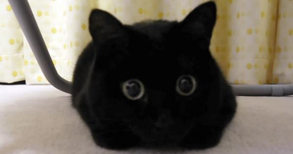 可愛すぎて発狂!黒猫ちゃんの得意技は目を「きゅい~ん」とすること