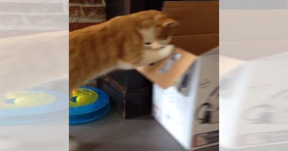 猫 ダンボール 悲劇 投稿挿入