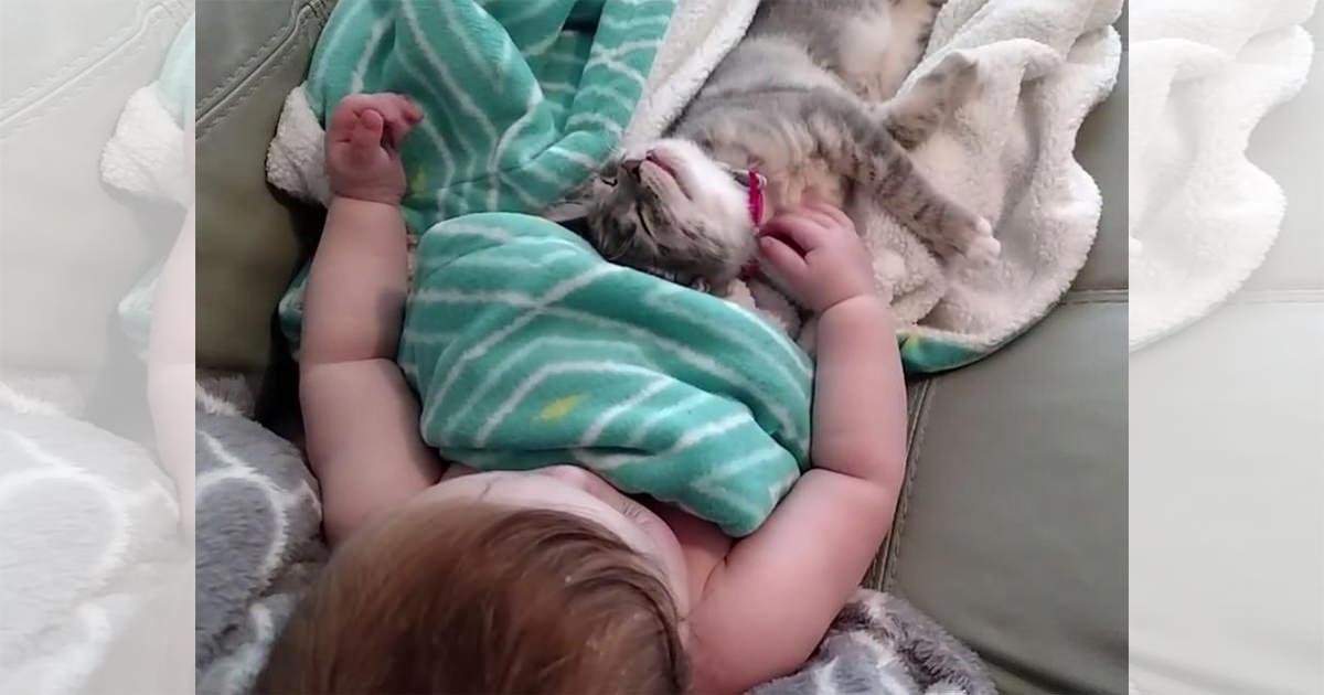 赤ちゃん 子猫 目覚め 投稿挿入