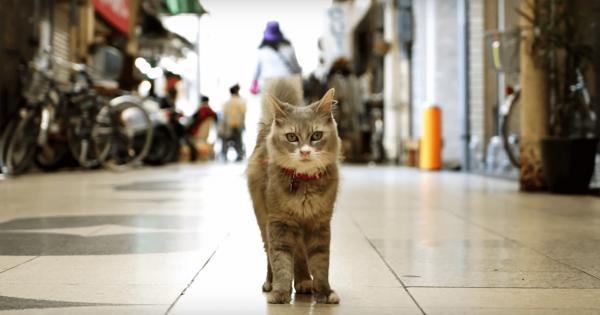 ニャンコになって探検!猫目線で街を見られるストリートビューが楽しすぎる