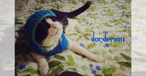 【今日のにゃんこ】人に厳しく猫にやさしい「メイちゃん」