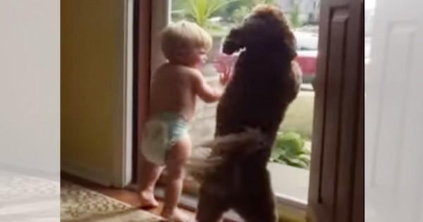 つられて笑顔に!パパの帰宅に喜びを爆発させる「赤ちゃん&ワンコ」が可愛すぎる