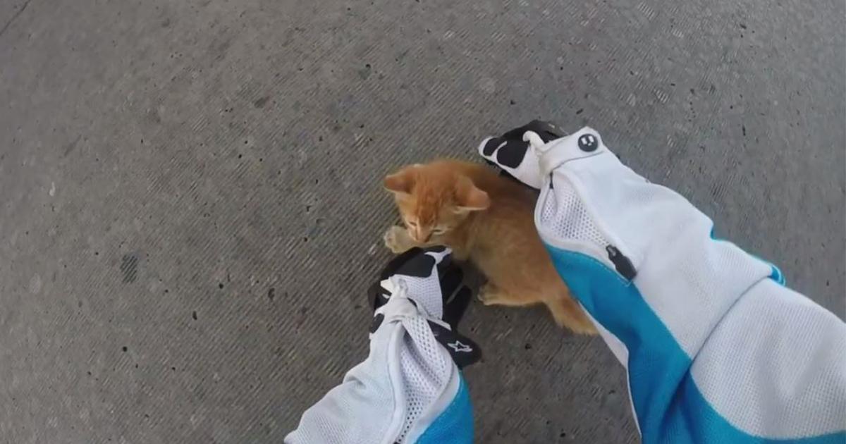 子猫 救出3 (1)