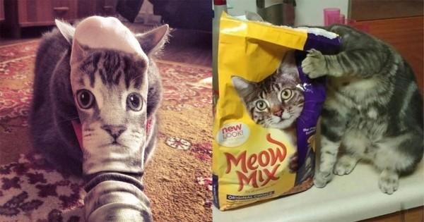 奇跡としか言えないニャン!猫たちの究極にミラクルな瞬間16選