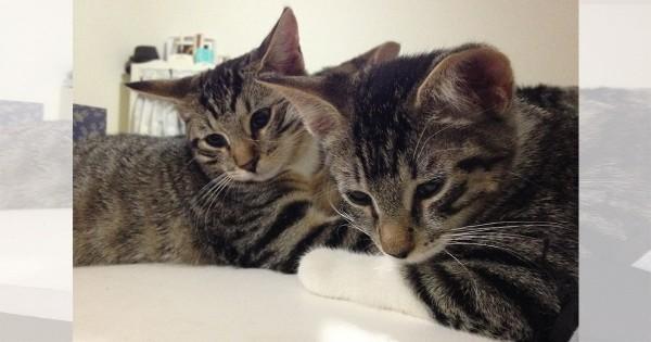 【今日のにゃんこ】とっても仲良しな双子のにゃんこ「おいちちゃん&おりょうちゃん」