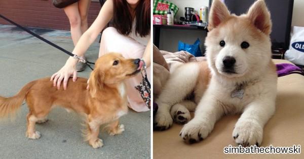 ミックス犬を飼っている人集合!ハーフとして生まれた犬がかわいすぎて悶絶(画像12枚)