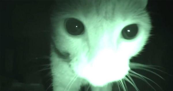 ホラームービーかと思いきや!ご主人が寝た後の猫の行動を紹介した動画がコワ可愛い