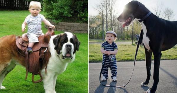 犬のボスは赤ちゃんであると証明する画像10選