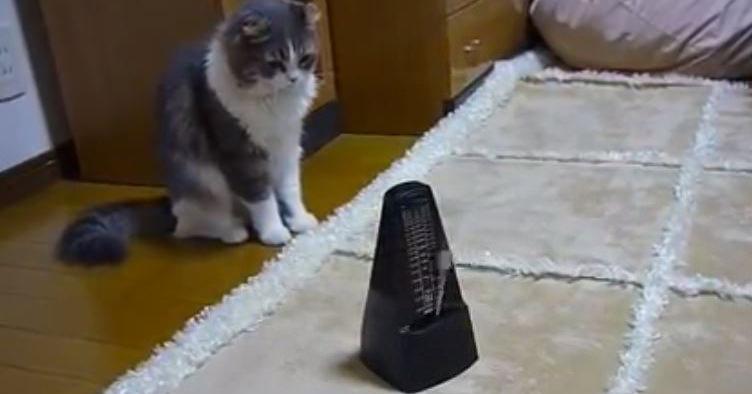 猫 メトロノーム1 (1)