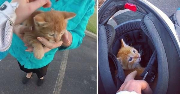 危ない、子猫が道路に!勇気を出して救いに出た女性の優しさに胸を打たれる